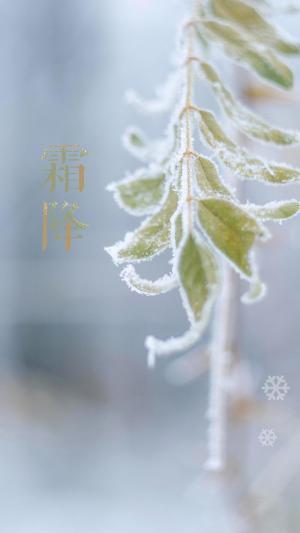 二十四节气:霜降