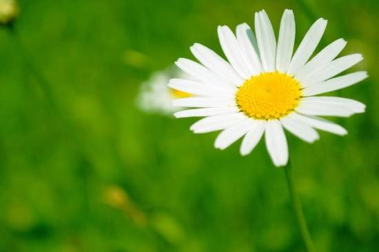 清新绿色的花儿