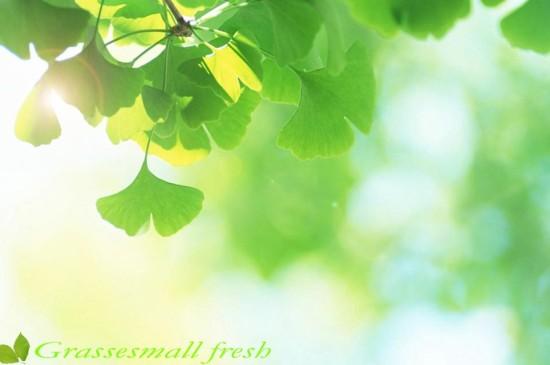 小清新绿色叶子