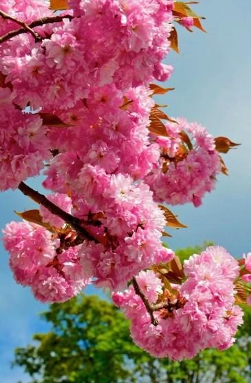 新鲜唯美花卉