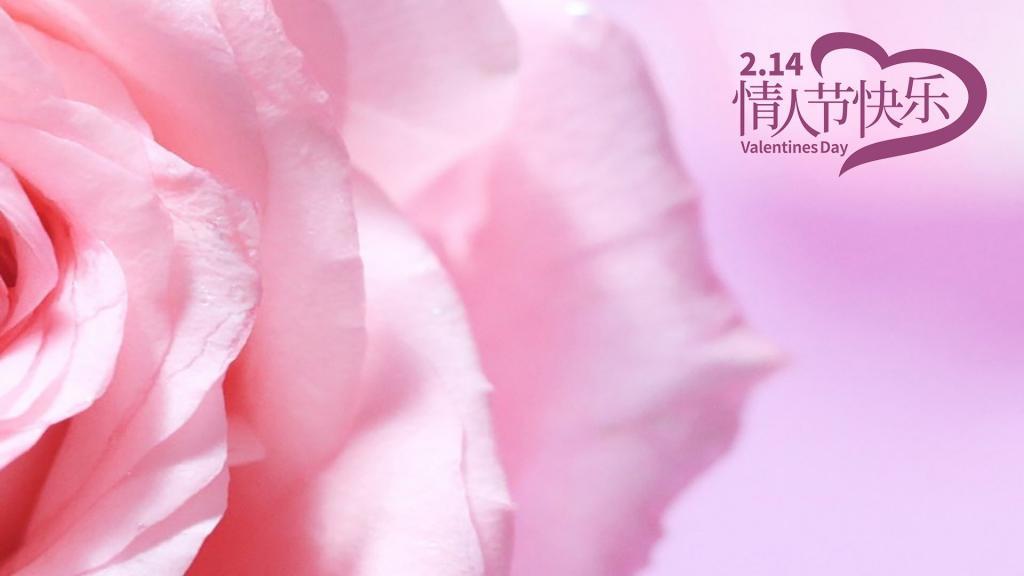 情人节浪漫玫瑰花