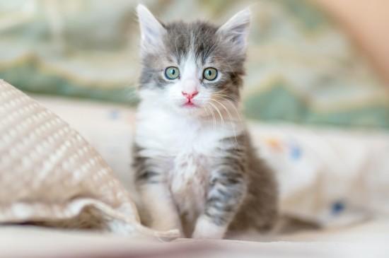 奶萌的小猫咪