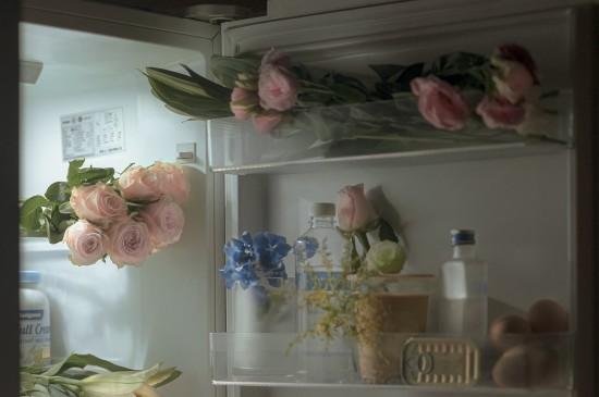 唯美花卉静物拍摄写真