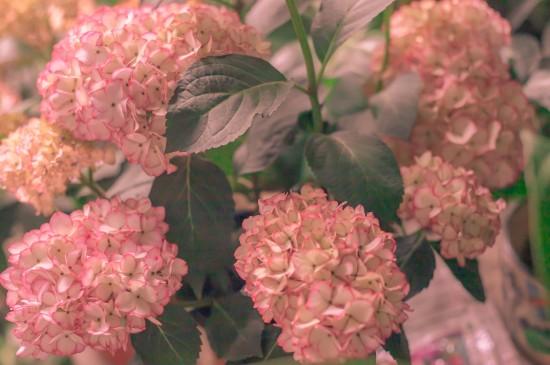 春日的浪漫花卉