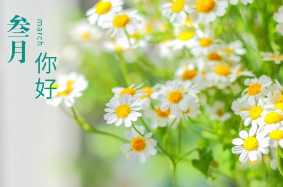 三月你好小清新雏菊花