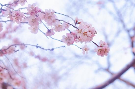 温柔的春天花卉风光