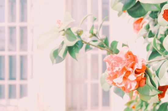 春天的浪漫朦胧风光