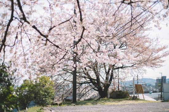 明媚阳光的春天景色