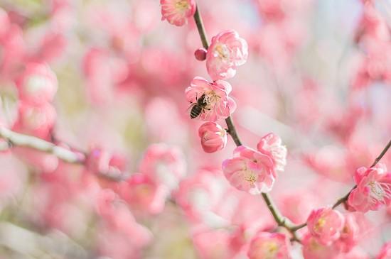春天浪漫花卉风光