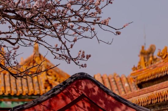 故宫的春天清新景色