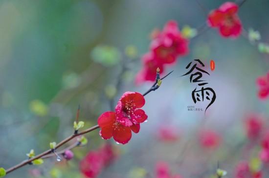 谷雨时节小清新海棠花