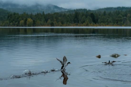 静谧的自然湖泊