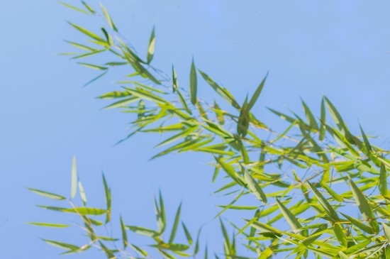 春天清新自然风光