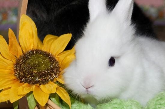 萌萌哒可爱兔子