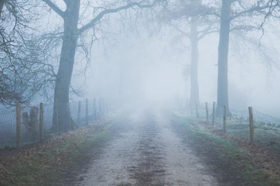 雾气笼罩的森林小路