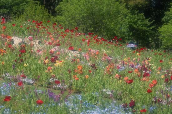 油画般唯美花卉