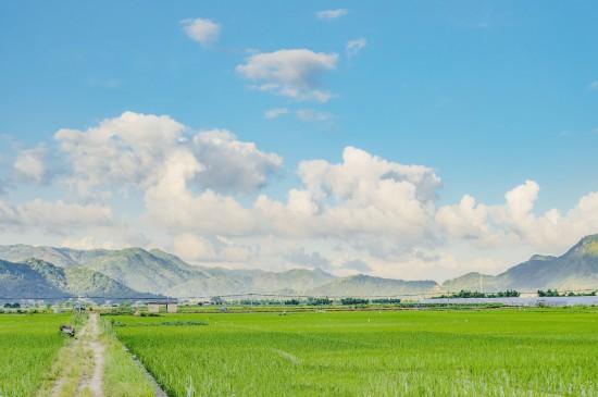 自然清新的田园风光