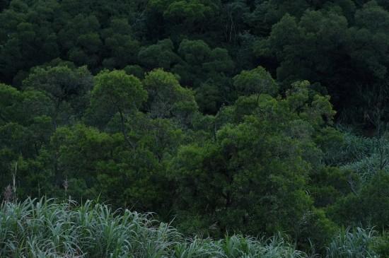 护眼的茂密森林风光