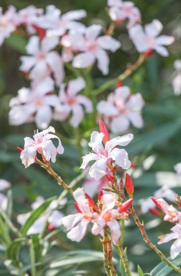 最富有春天气息的野花