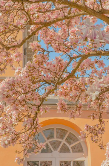 温柔的瑞士春天景色