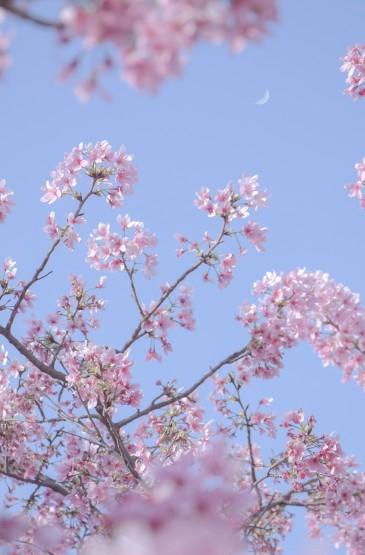 温柔浪漫的春天花卉