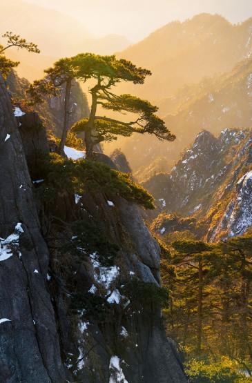 雪中黄山松傲然绝美风光