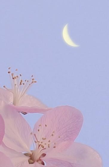 迷人浪漫的樱花