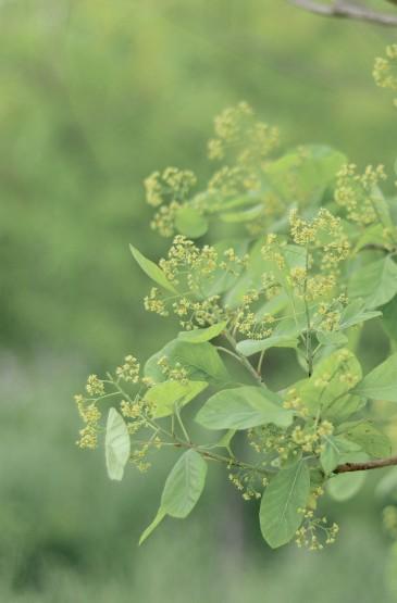 小清新春天植物摄影