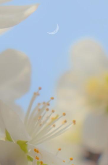 浪漫美丽的樱花风光
