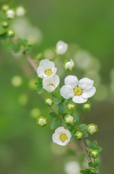 小清新花朵盛开