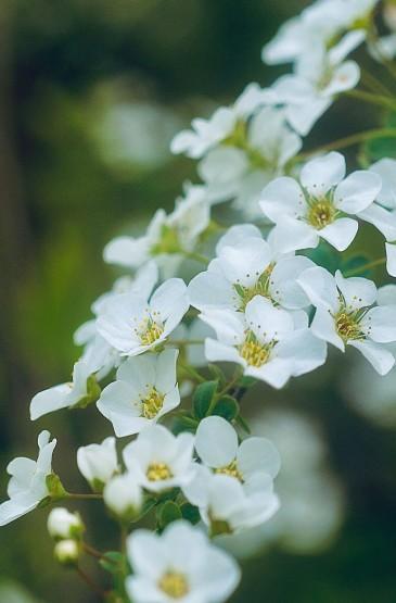 娇嫩清新的花朵