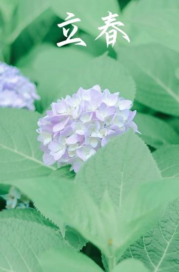 二十四节气立春植物配图