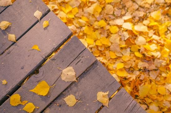 唯美迷人的秋季美景