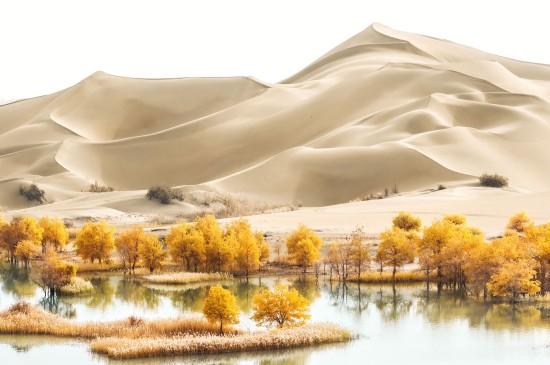 沙漠里的胡杨美景