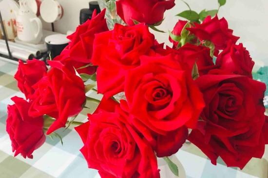 艳丽如火的红玫瑰