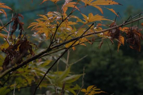 秋天清新美丽风光