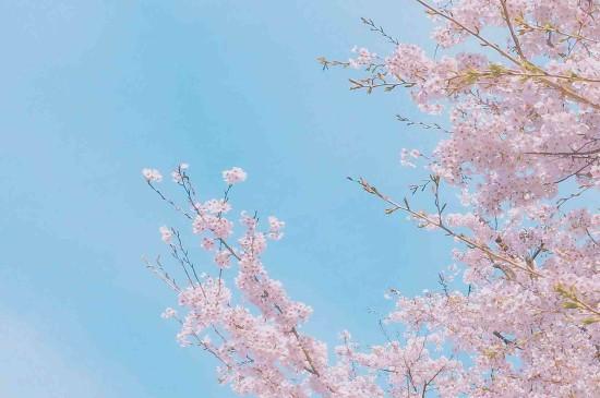 日系小清新迷人摄影