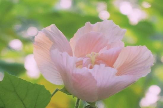 优美迷人的花朵