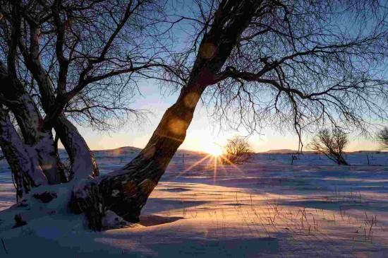 晨曦下的雪地美景