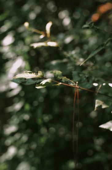 清新养眼的绿色枝叶