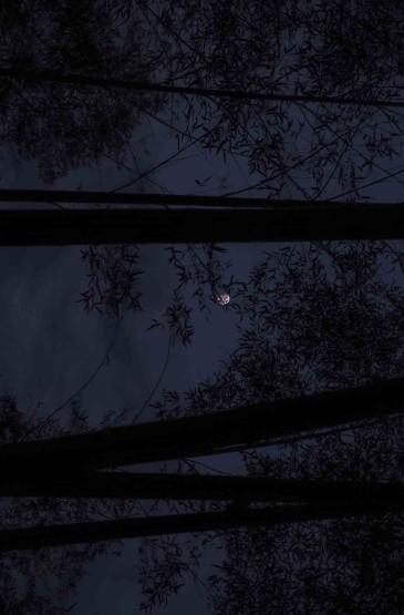 夜空唯美皎洁的月亮